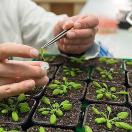 Pflanzenwissenschaften botanik